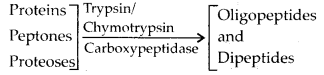 NCERT Solutions For Class 11 Biology Digestion and Absorption Q4