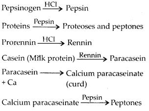 NCERT Solutions For Class 11 Biology Digestion and Absorption Q5