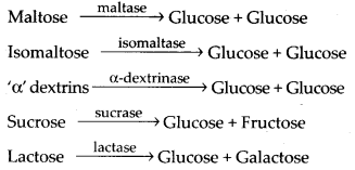 NCERT Solutions For Class 11 Biology Digestion and Absorption Q9.2