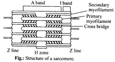 NCERT Solutions For Class 11 Biology Locomotion and Movement Q1