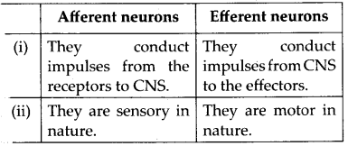 NCERT Solutions For Class 11 Biology Neural Control and Coordination Q12
