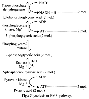 NCERT Solutions For Class 11 Biology Respiration in Plants Q4.1