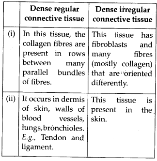 NCERT Solutions For Class 11 Biology Structural Organisation in Animals Q12.3