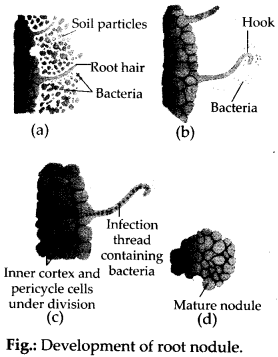 NCERT Solutions For Class 11 Biology Mineral Nutrition Q9