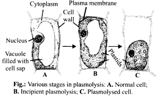 NCERT Solutions For Class 11 Biology Transport in Plants Q7