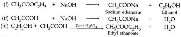 Solved CBSE Sample Papers for Class 10 Science Set 1 8