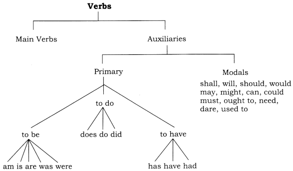 CBSE Class 8 English Grammar Verb