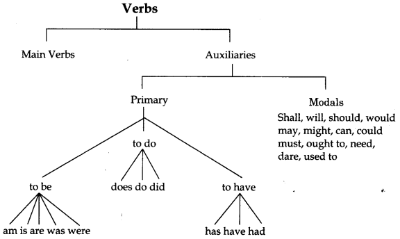 CBSE Class 6 English Grammar Verb 1