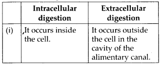 NCERT Solutions For Class 11 Biology Animal Kingdom Q4