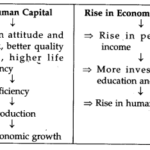 Human Capital Formation in India NCERT Solutions for Class 11 Indian Economic Development Q15