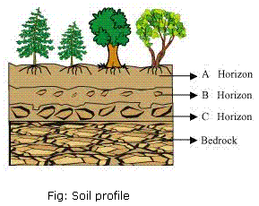 NCERT Solutions Class 7 Science Chapter 9 Soil Q7