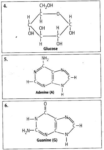 NCERT Solutions For Class 11 Biology Biomolecules Q4.1