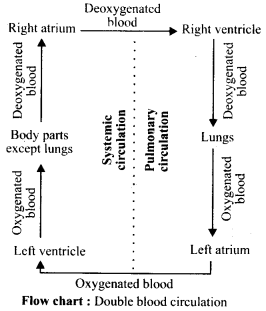 NCERT Solutions For Class 11 Biology Body Fluids and Circulation Q6