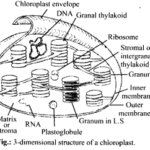 NCERT Solutions For Class 11 Biology Cell The Unit of Life Q7.1