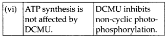 NCERT Solutions For Class 11 Biology Photosynthesis in Higher Plants Q6.3