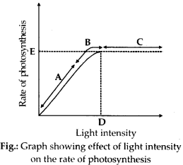 NCERT Solutions For Class 11 Biology Photosynthesis in Higher Plants Q8