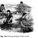 NCERT Solutions for Class 6 Science Chapter 16 Garbage In Garbage Out Q1