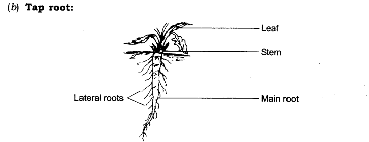 NCERT Solutions for Class 6 Science Chapter 7 Getting to Know Plants Q2.1