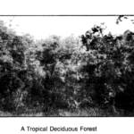 NCERT Solutions For Class 7 Geography Social Science Chapter 6 Natural Vegetation and Wildlife Q5.1