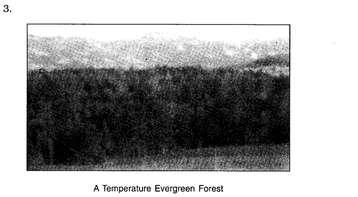 NCERT Solutions For Class 7 Geography Social Science Chapter 6 Natural Vegetation and Wildlife Q5.2