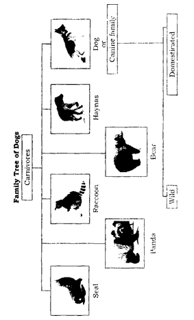 NCERT Solutions for Class 6 English Chapter 2 How the Dog Found Himself Working with Language 6