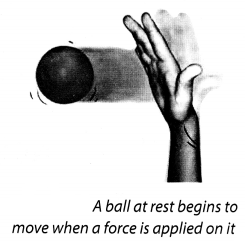NCERT Solutions for Class 8 Science Chapter 11 Force and Pressure Activity 3