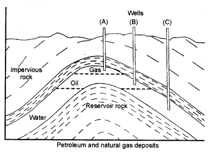 NCERT Solutions for Class 8 Science Chapter 5 Materials Coal and Petroleum 3 Marks Q5