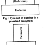 NCERT Solutions For Class 12 Biology Ecosystem Q8