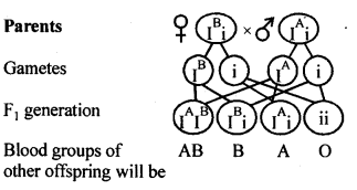 NCERT Solutions For Class 12 Biology Principles of Inheritance and Variation Q12