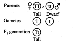 NCERT Solutions For Class 12 Biology Principles of Inheritance and Variation Q4