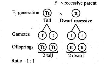 NCERT Solutions For Class 12 Biology Principles of Inheritance and Variation Q5