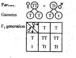 NCERT Solutions For Class 12 Biology Principles of Inheritance and Variation Q6