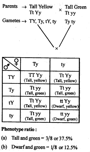 NCERT Solutions For Class 12 Biology Principles of Inheritance and Variation Q7