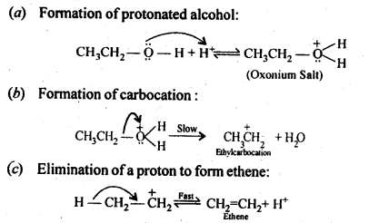 NCERT Solutions For Class 12 Chemistry Chapter 11 Alcohols Phenols and Ether Exercises Q19