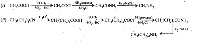 NCERT Solutions For Class 12 Chemistry Chapter 13 Amines Exercises Q5