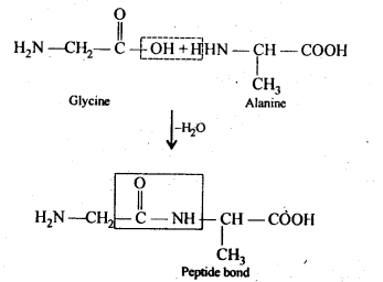 NCERT Solutions For Class 12 Chemistry Chapter 14 Biomolecules Exercises Q12