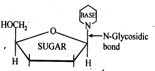 NCERT Solutions For Class 12 Chemistry Chapter 14 Biomolecules Exercises Q21