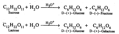 NCERT Solutions For Class 12 Chemistry Chapter 14 Biomolecules Exercises Q7