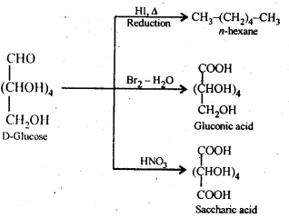 NCERT Solutions For Class 12 Chemistry Chapter 14 Biomolecules Exercises Q9
