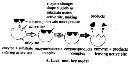 NCERT Solutions For Class 12 Chemistry Chapter 5 Surface Chemistry Exercises Q13