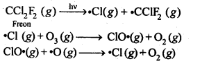 NCERT Solutions For Class 12 Chemistry Chapter 7 The p Block Elements Exercises Q20