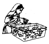 NCERT Solutions For Class 10 Maths Chapter 15 Probability Ex 15.1 Q11