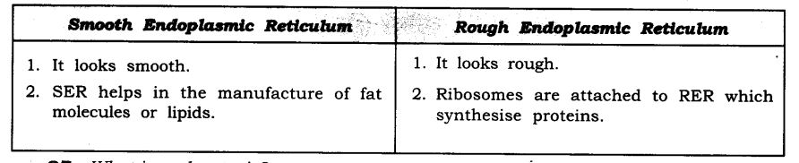 NCERT Solutions For Class 9 Science Chapter 5 The Fundamental Unit of Life SAQ Q6