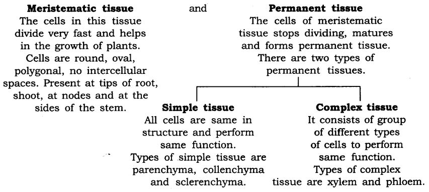 NCERT Solutions For Class 9 Science Chapter 6 Tissues LAQ Q1