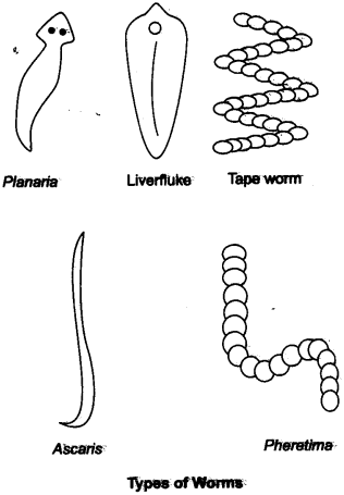 NCERT Solutions for Class 9 Science Chapter 7 Diversity in Living Organisms LAQ Q5