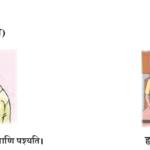 Abhyasvan Bhav Sanskrit Class 9 Solutions Chapter 11 धातरूपाणि 1